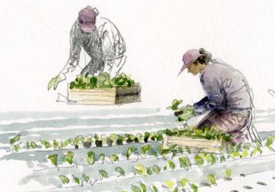 Peinture d'une femme est en train de planter des plants à genoux dans un champ sous différents points de vue.